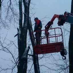 спил деревьев Москва
